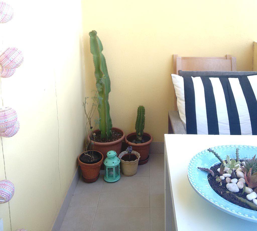 o meu jardim-3