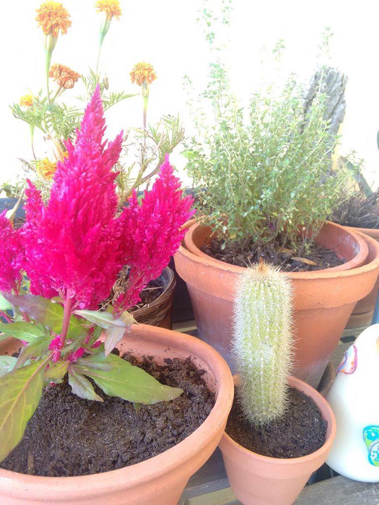 o meu jardim-5