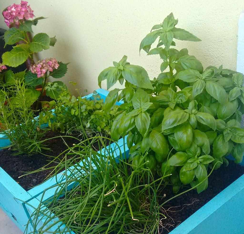 o meu jardim-5.1