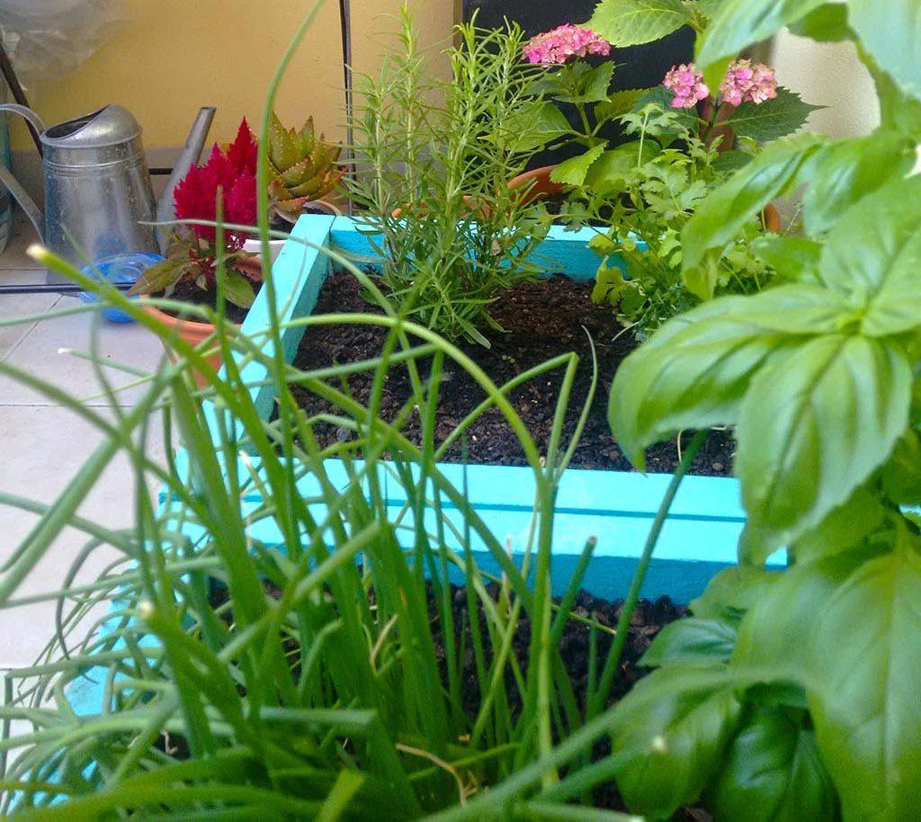 o meu jardim-6