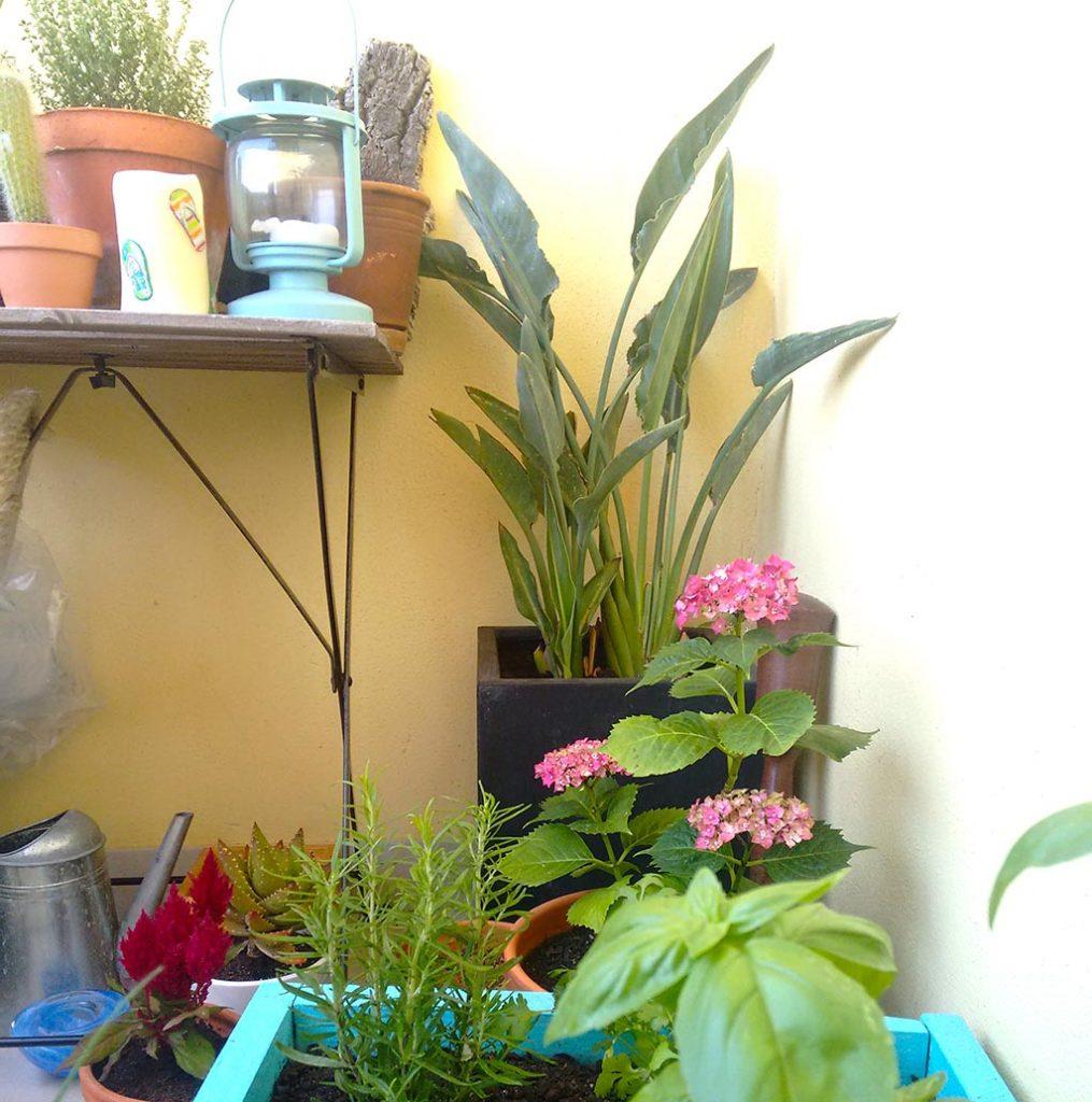 o meu jardim-7
