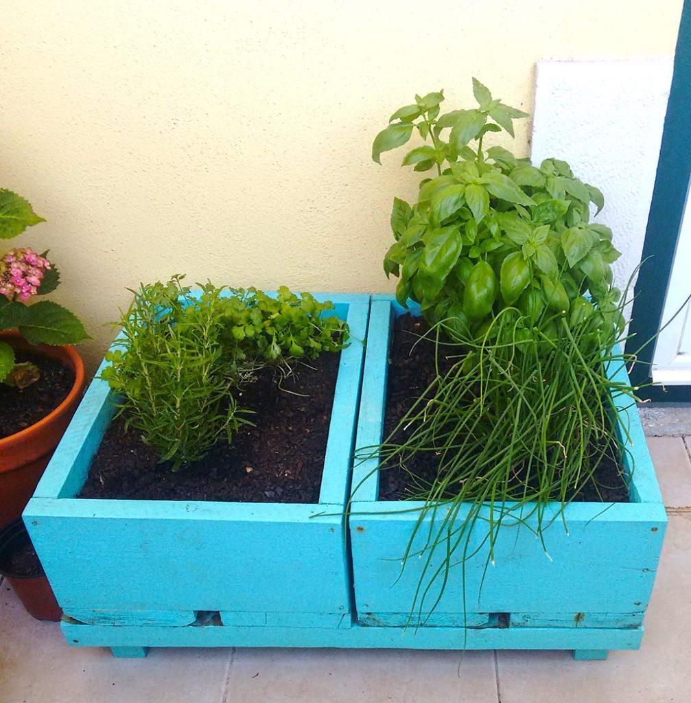 o meu jardim-8