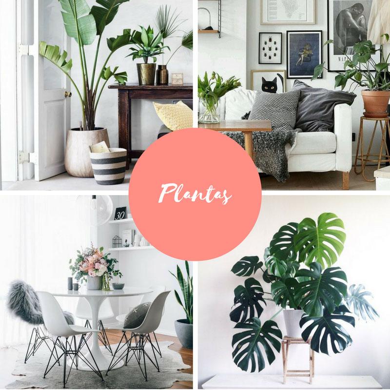 plantas-na-sala